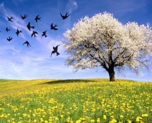 equinozio-di-primavera-3bmeteo-82793
